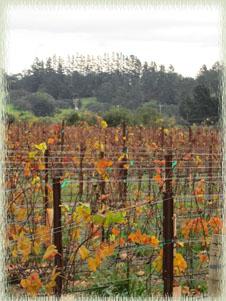 Winter in Santa Barbara Wine Country at Melville Vineyard