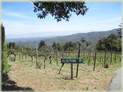 Fogarty's Albutom vineyard