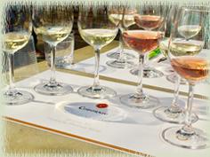 Codorniu Sparkling Wines