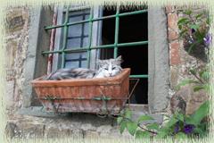 Feline Sentry