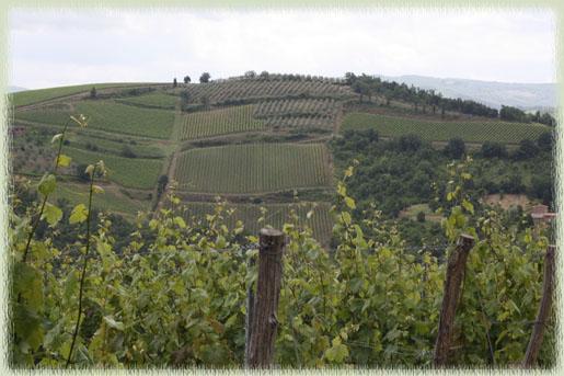 Vineyard View from Cantinetta di Rignana