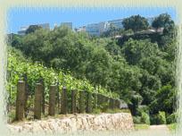 Moraga Vineyards