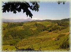 Gattinara Area Vineyard
