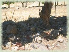 Vine Cliff Soil